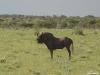 namibia-allgemein017