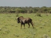 namibia-allgemein018